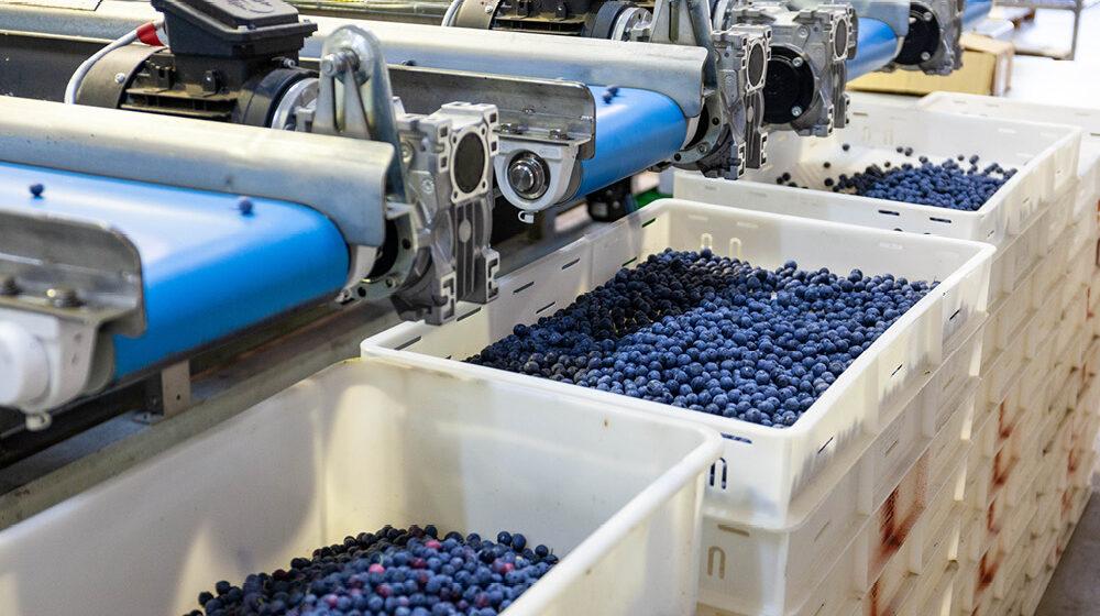 gpgraders-cust-jolly-berries-image-6