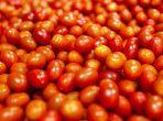 gpgraders-GP Graders' AirJet® Cherry and Grape Tomato Grader