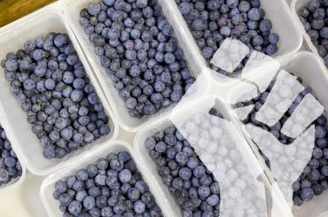 gpgraders-a-blueberry-revolution